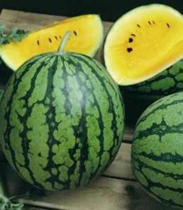 Melon d'eau 'Yellow Baby'
