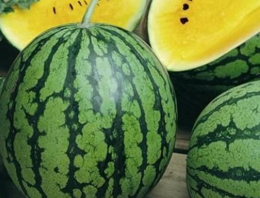 Melon d'eau 'Yellow Baby'