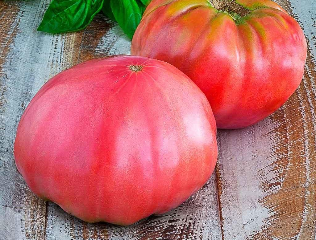Tomate rose-rouge 'Brandywine'