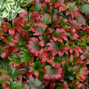 Massifs colorés pour une floraison estivale et automnale