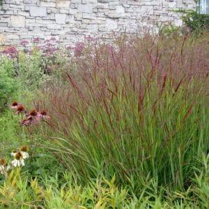 Graminée pour colorer vos massifs pour une floraison estivale et automnale
